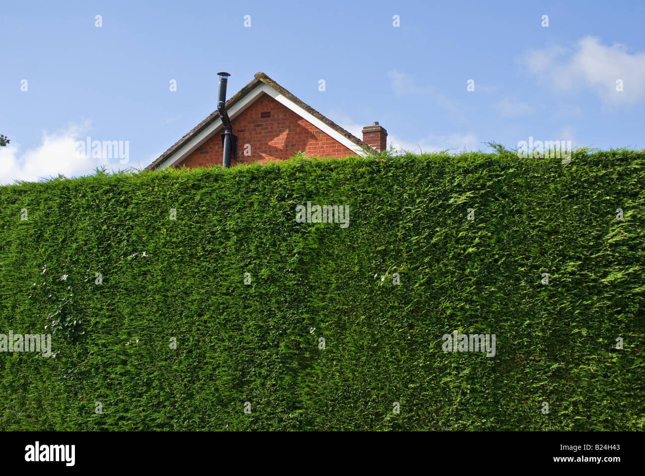 Tall leylandii evergreen conifer hedge grown to conceal new property on a neighbouring plot - Stock Image