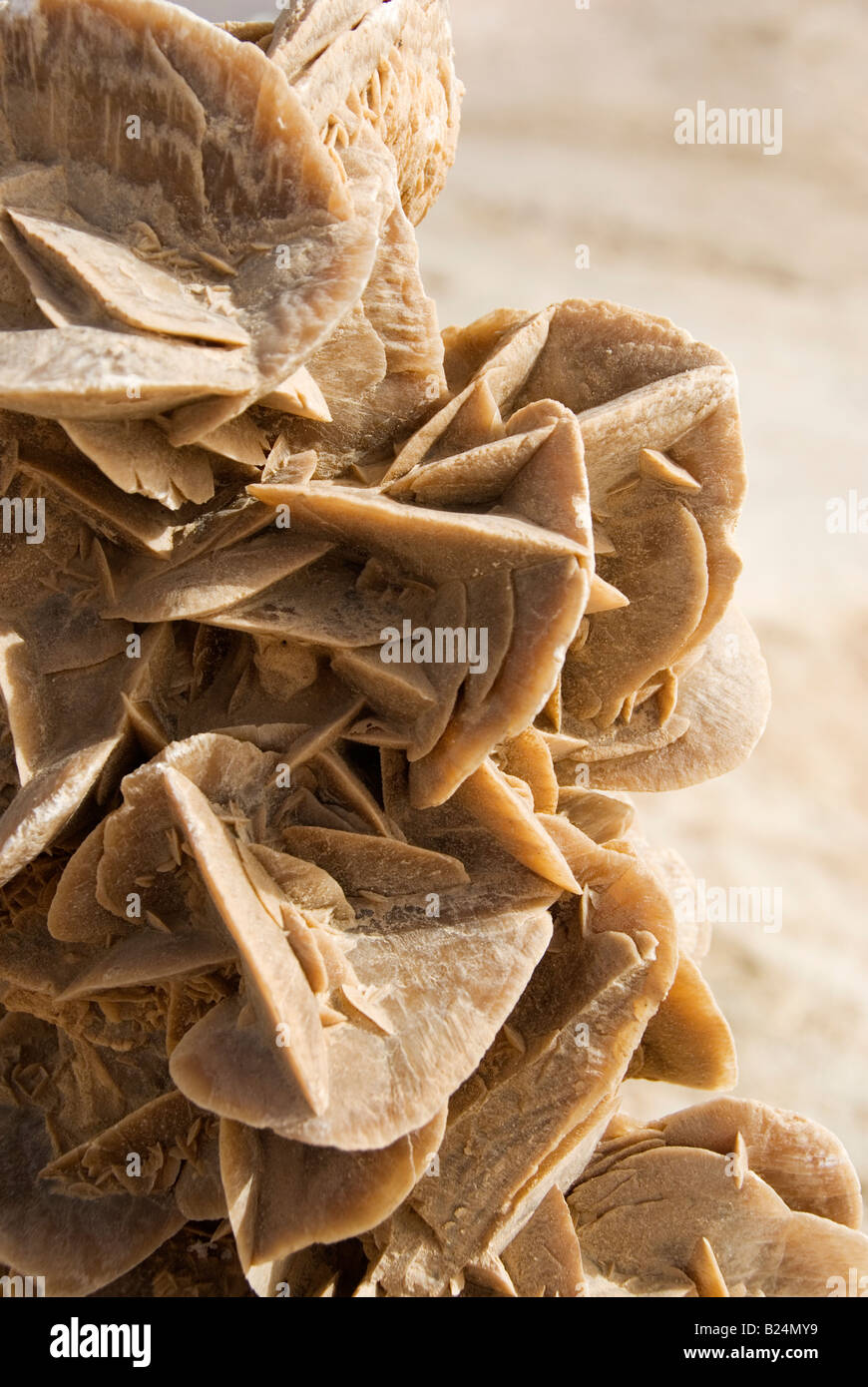 Desert Rose Mineral formation, Tunisia - Stock Image