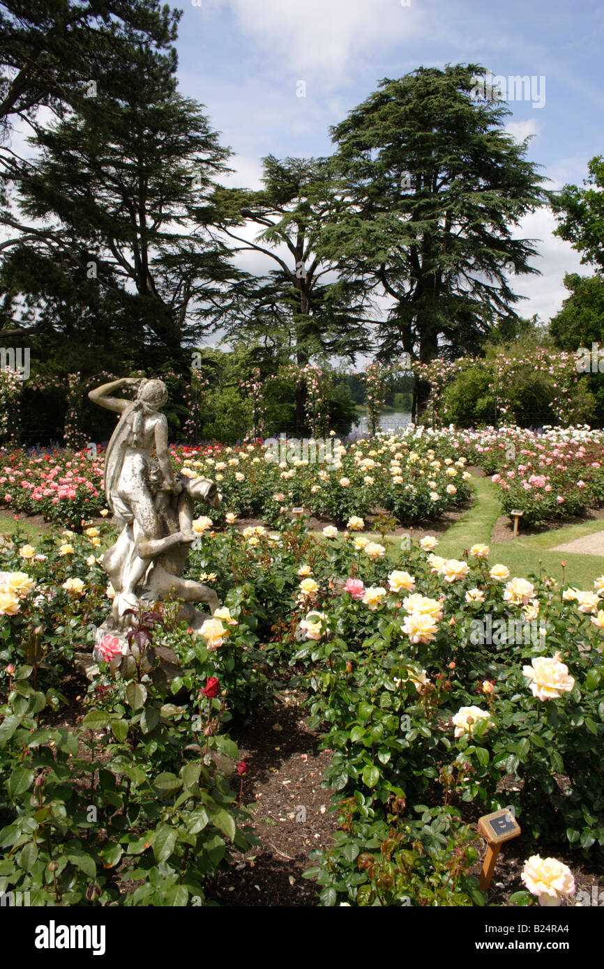 Rose Gardens Blenheim Palace Oxfordshire - Stock Image