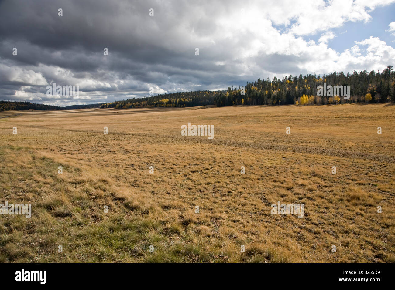 Great Grassland and wonderful cloudscape - Stock Image