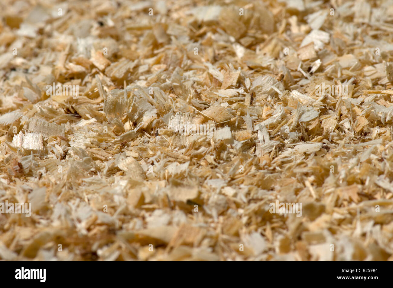 A pile of wooden chips produced by the chain saw, origin eastern softwoods fir and spruce. - Stock Image