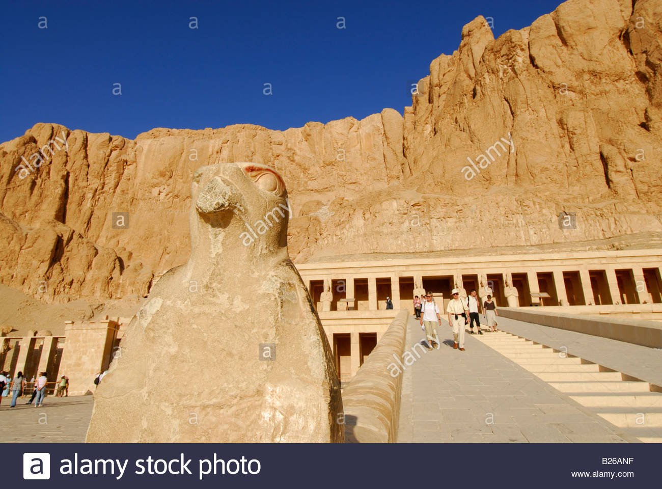 statue of falcon besides stairway to temple of Hatshepsut (Hatshepset), Thebes, western bank, valley of the queens, - Stock Image