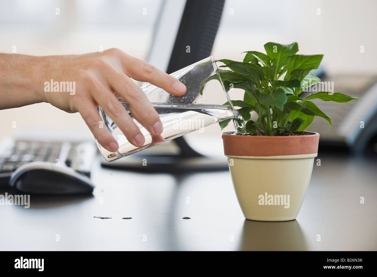 Businessman watering potted plant - Stock Image