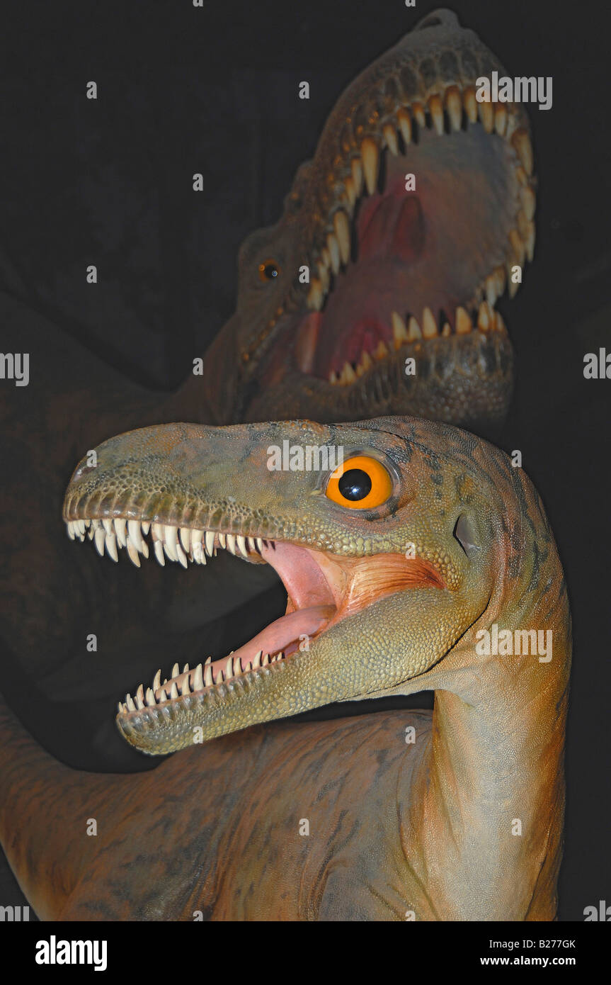 Restoration of two Albertosaurus dinosaurs at The Royal Tyrrell Museum at Drumheller, Alberta, Canada - Stock Image