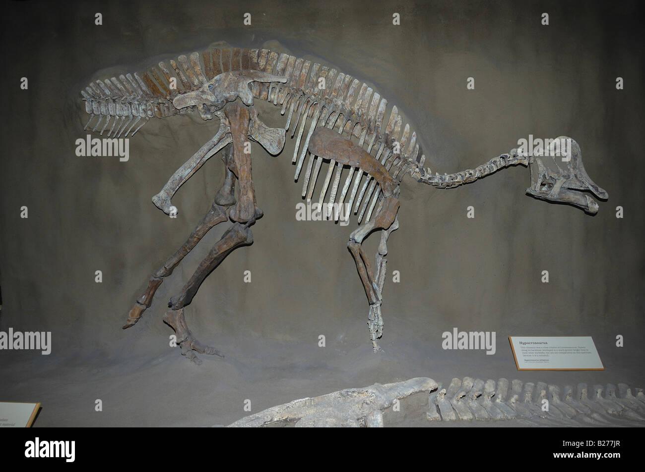 Dinosaur fossil at Royal Tyrrell in Drumheller, Alberta, Canada - Stock Image