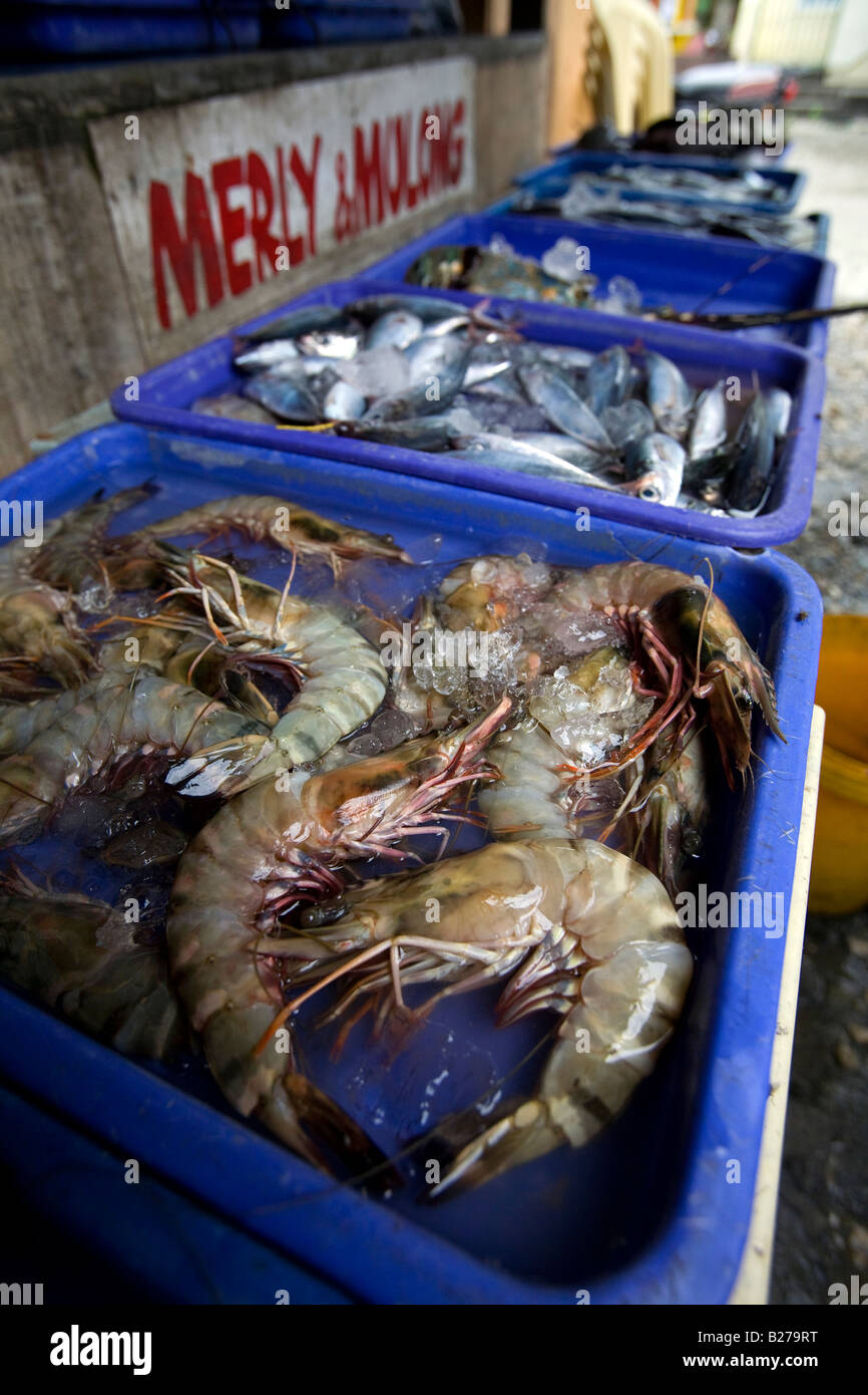 Large fresh prawns in a seafood market near Puerto Galera in Sabang, Oriental Mindoro, Philippines. - Stock Image