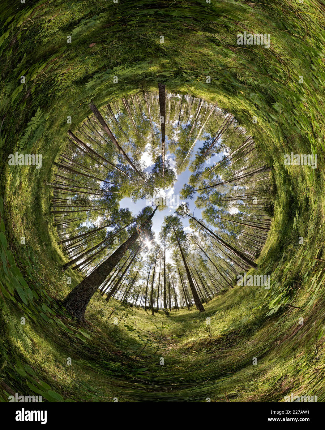 fisheye 360 degrees image from a leaf forest in Sweden Stock Photo