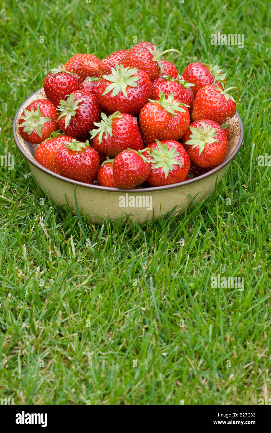 A bowl of freshly picked strawberries on green grass outside - Stock Image
