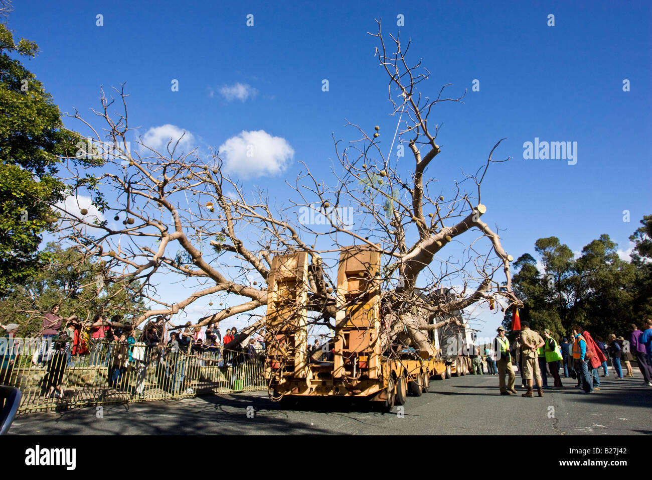 A 750 year old boab tree weighing 36 tons arrives in King's Park in Perth after its 3200km journey from Warmun - Stock Image