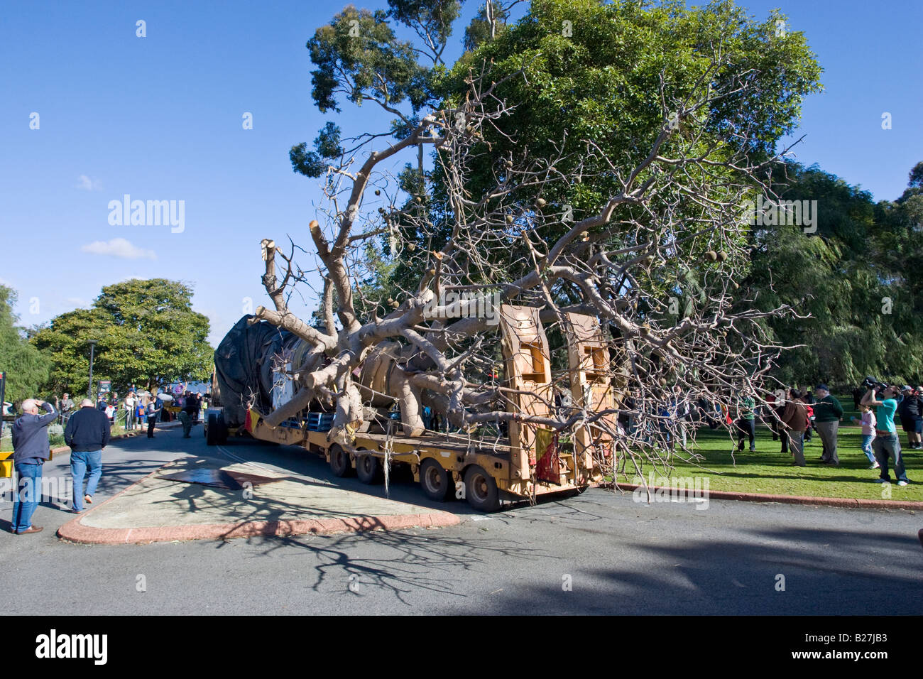 A boab tree arrives in King's Park in Perth after its 3200km journey from Warmun in the Kimberley. - Stock Image