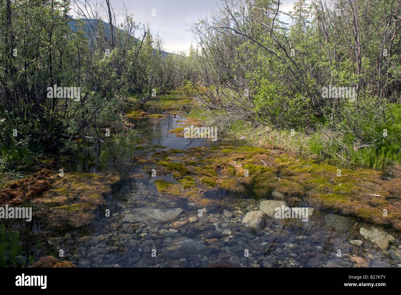 River bed in McCarthy, Alaska. - Stock Image