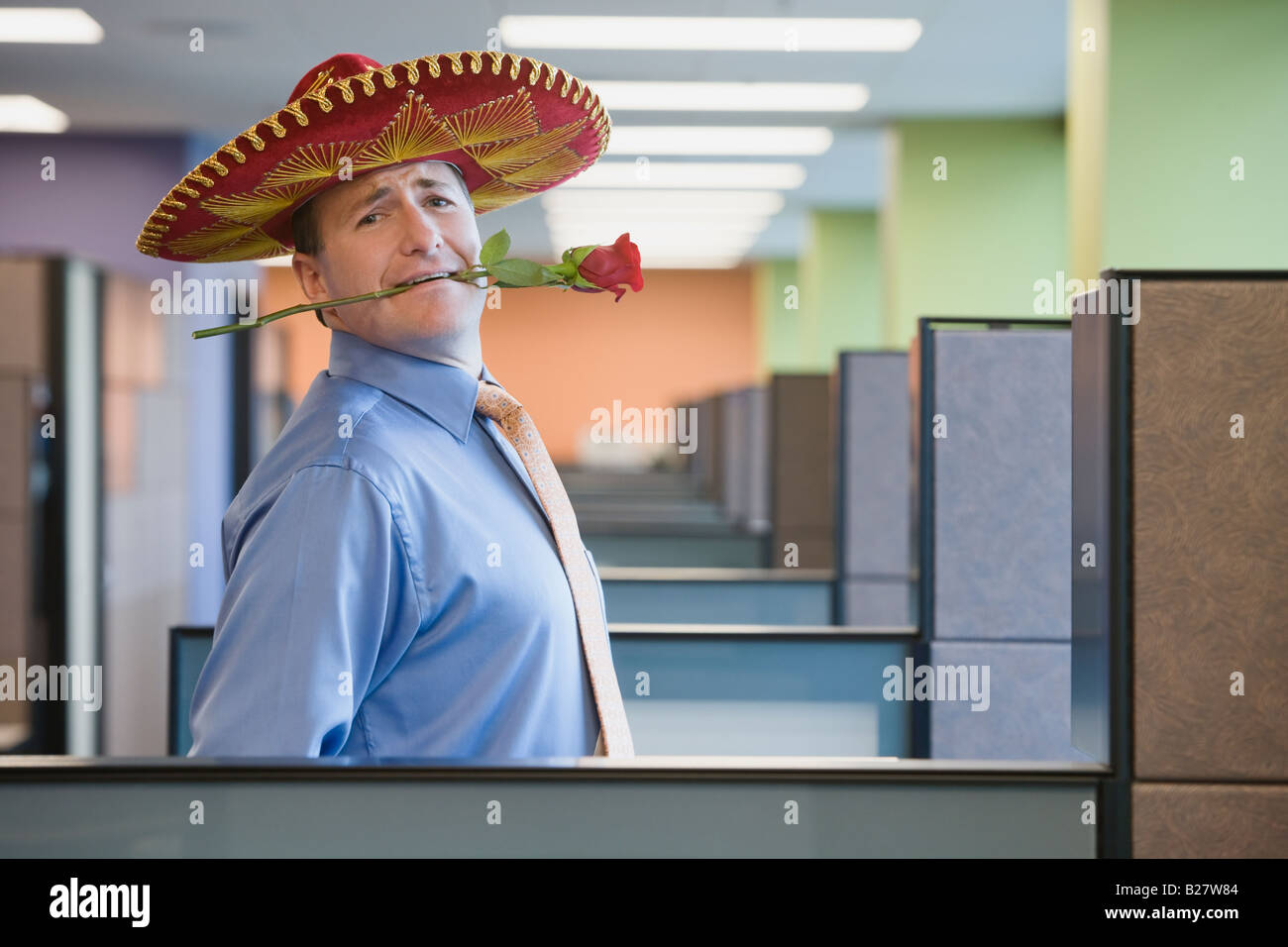 Businessman wearing sombrero and holding rose in teeth - Stock Image