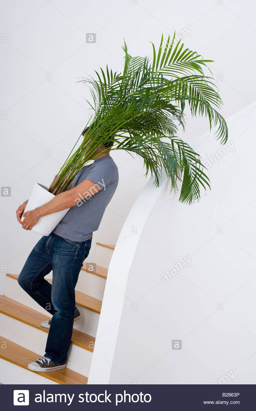 Young man with plant on stairs - Stock Image