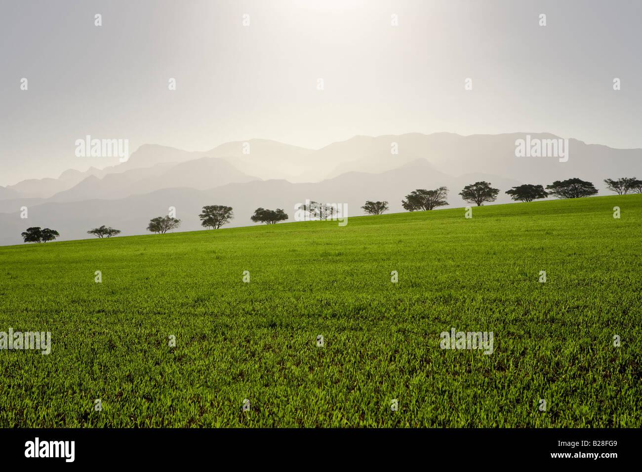 Overberg Farm Lands - Stock Image