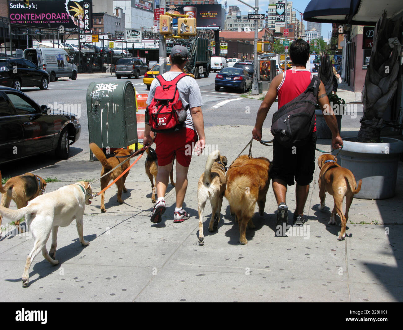 professional dog walking walker urban city - Stock Image