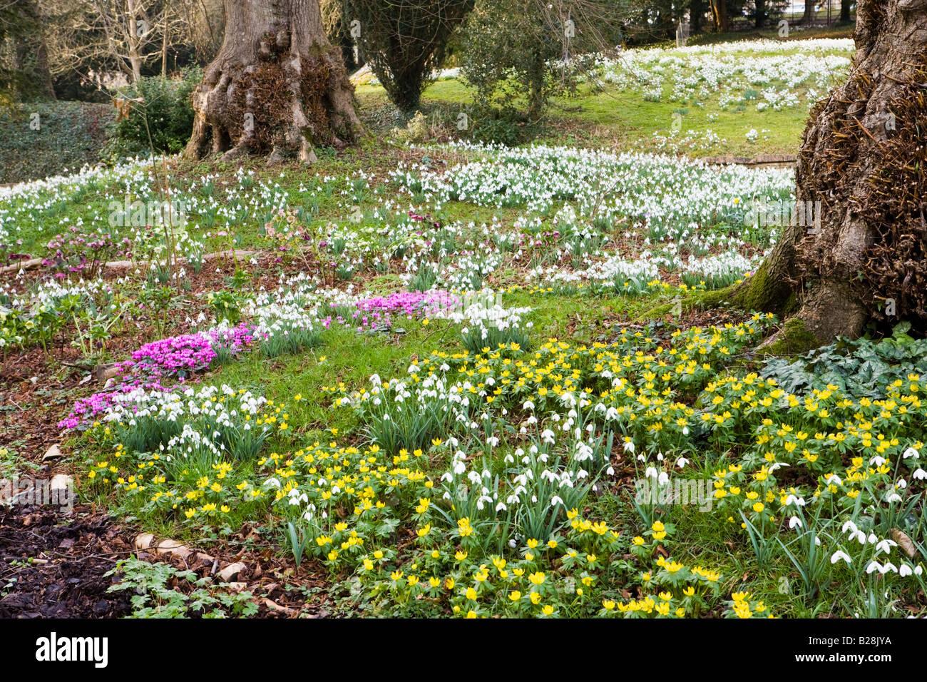 Snowdrop Garden Stock Photos Snowdrop Garden Stock Images Alamy