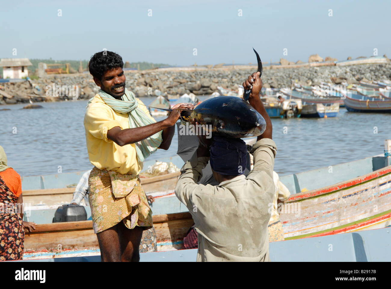 A fisherman handing over a big fish catch to fellow fishermen for sale at Vizhinjam,Kerala,india - Stock Image