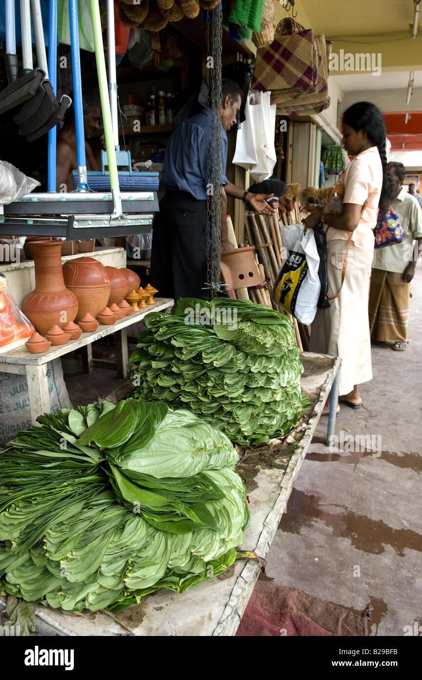 Aluthgama Sri Lanka Date 20 04 2008 Ref ZB648 115261 0014 COMPULSORY CREDIT World Pictures Photoshot - Stock Image