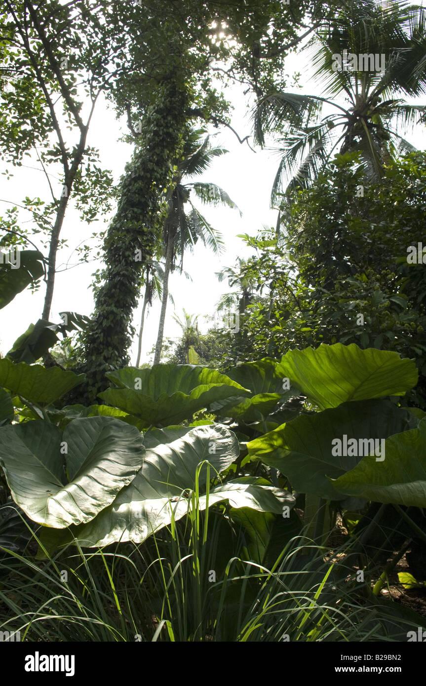 Sri Lankan jungle Sri Lanka Date 20 04 2008 Ref ZB648 115261 0082 COMPULSORY CREDIT World Pictures Photoshot - Stock Image