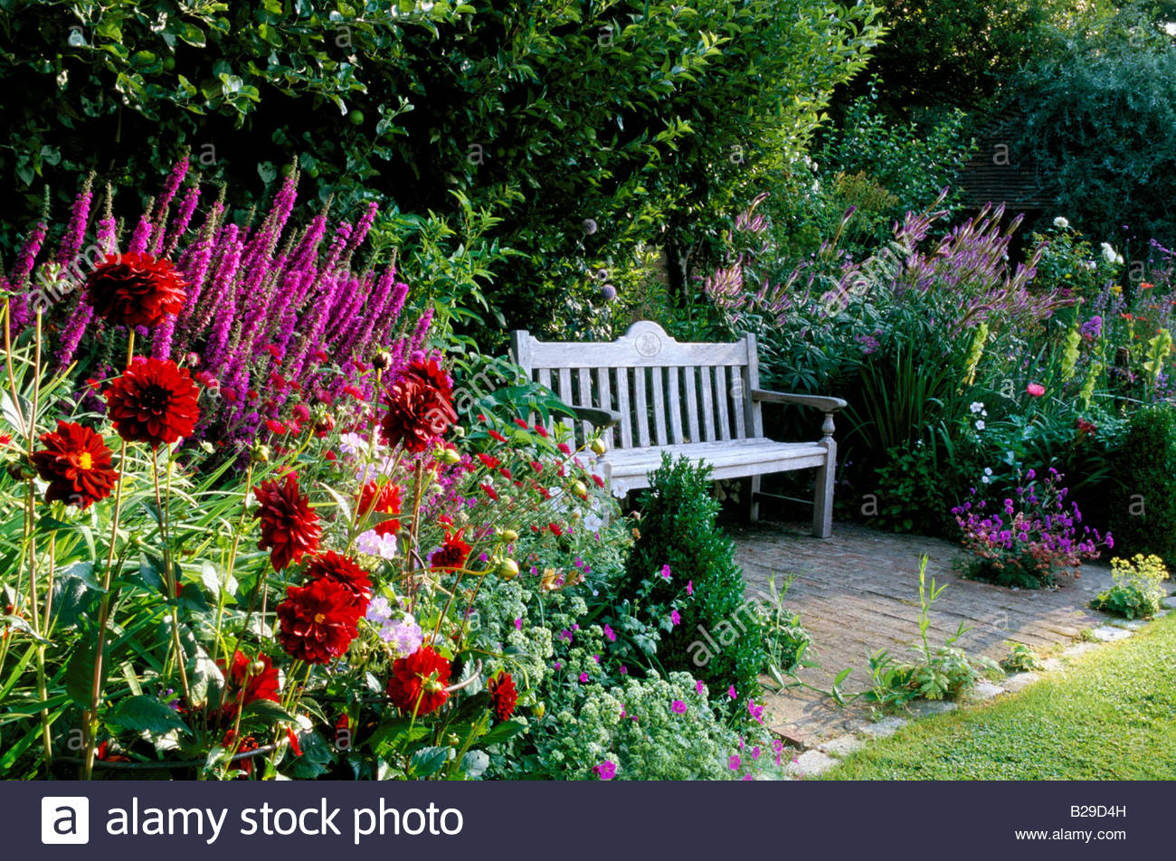 Private garden Sussex Wooden bench placed within herbaceous summer border Dahlias Lythrum Gladiolus - Stock Image