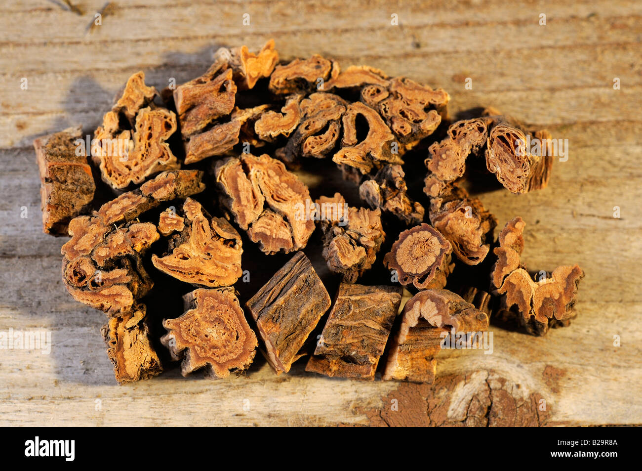 Largeleaf Gentian Root / Qin Jiao - Stock Image