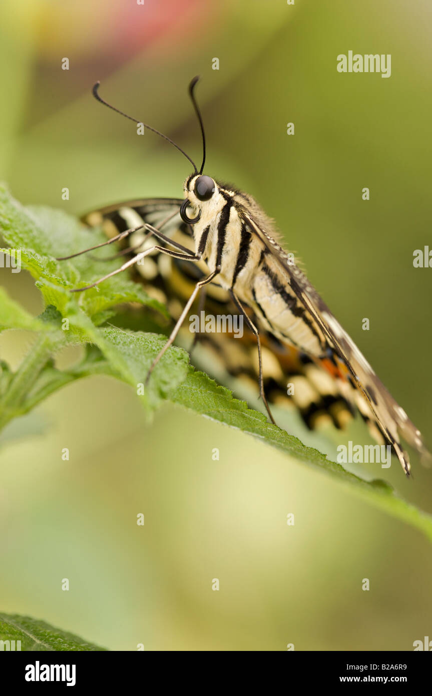 close up portrait of yellow butterfly Stock Photo
