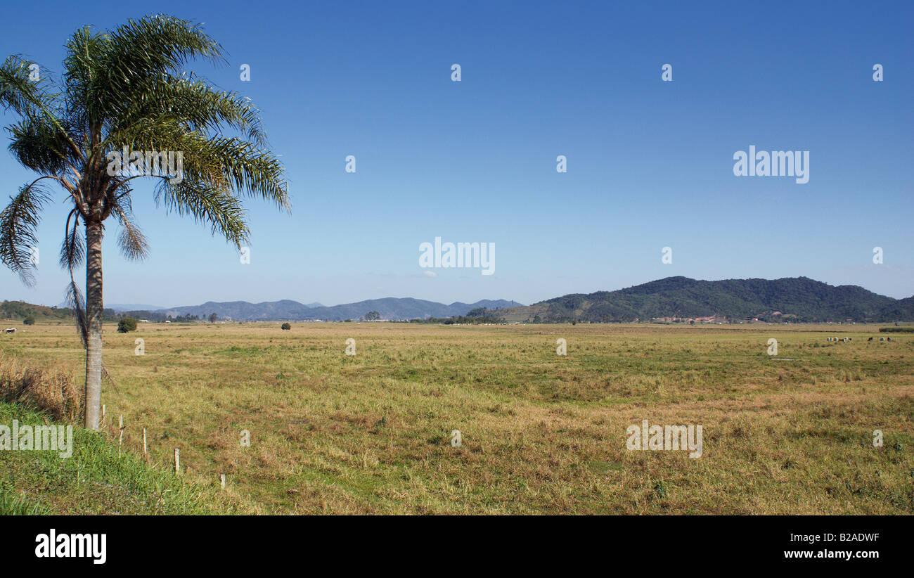 Pastureland - Stock Image