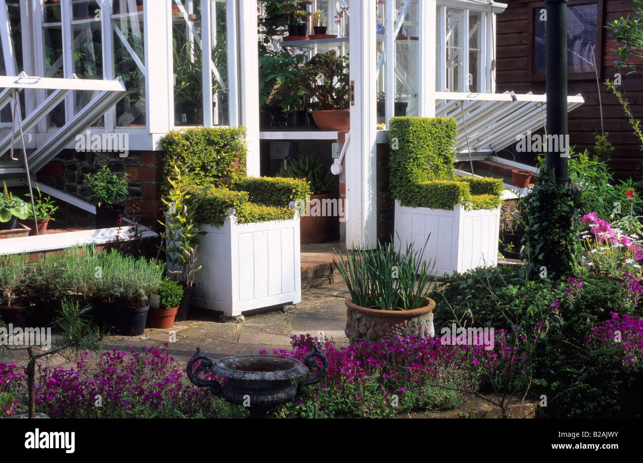 Tilford Cottage Surrey Alitex glasshouse entrance with yew topiary chairs - Stock Image
