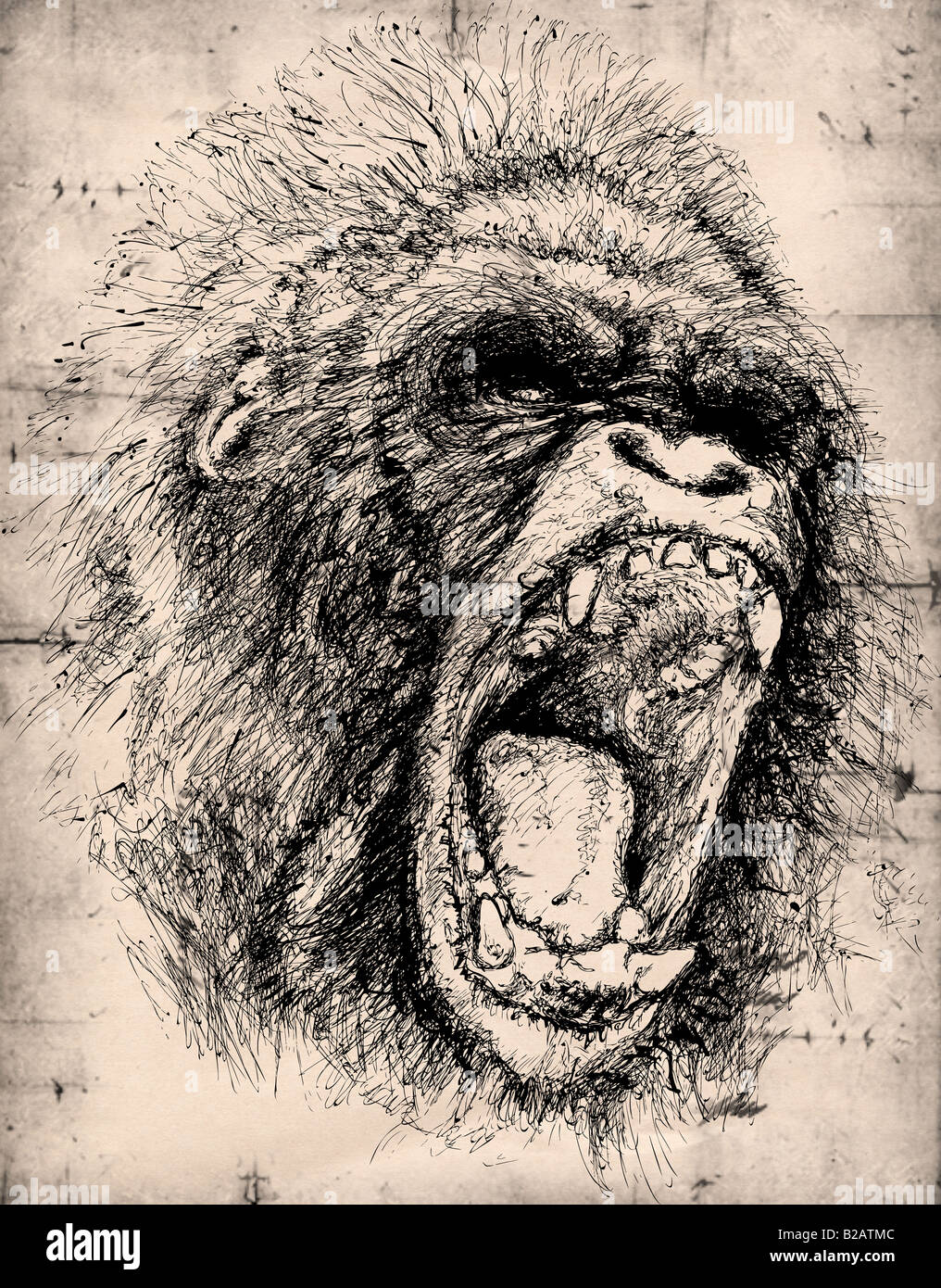 Gorilla pencil drawing stock photo 18678588 alamy