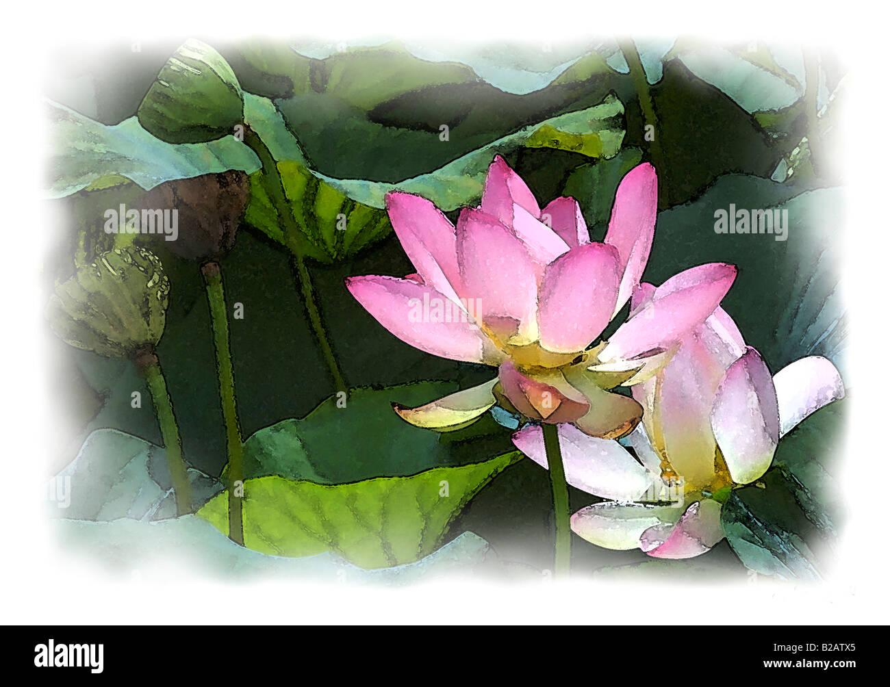 Lotus greeting stock photos lotus greeting stock images alamy pink lotus flowers water colour painting effect stock image izmirmasajfo