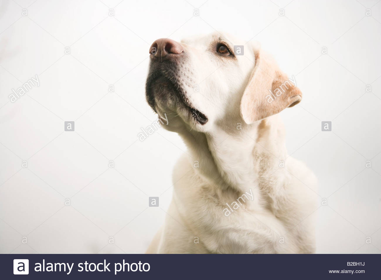 Close up of dog - Stock Image