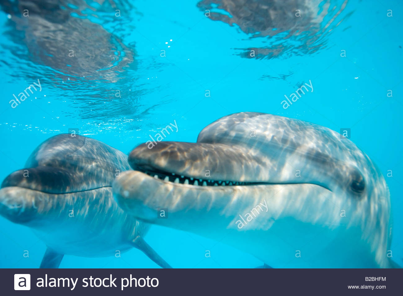 Close up of dolphins underwater - Stock Image