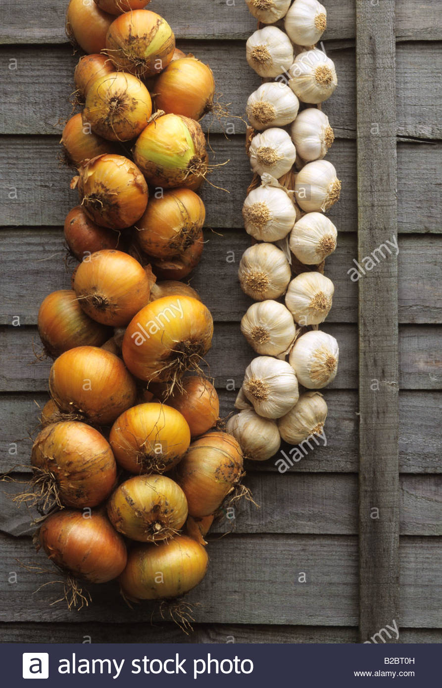 strings of onions and garlic hanging up in garden shed - Stock Image