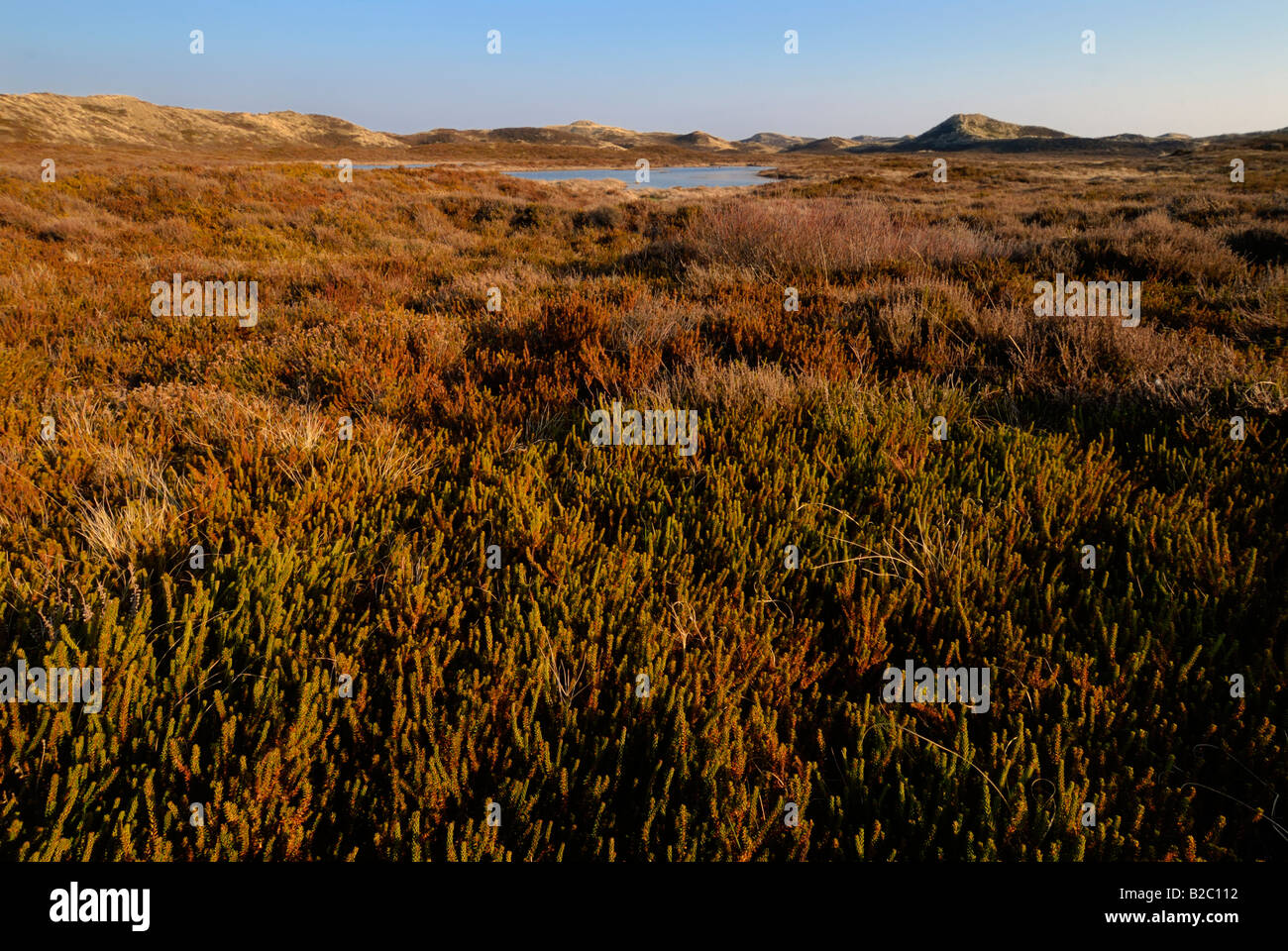 Brown dunes, humid dune valleys, Listland, Sylt, Schleswig-Holstein, Germany, Europe - Stock Image