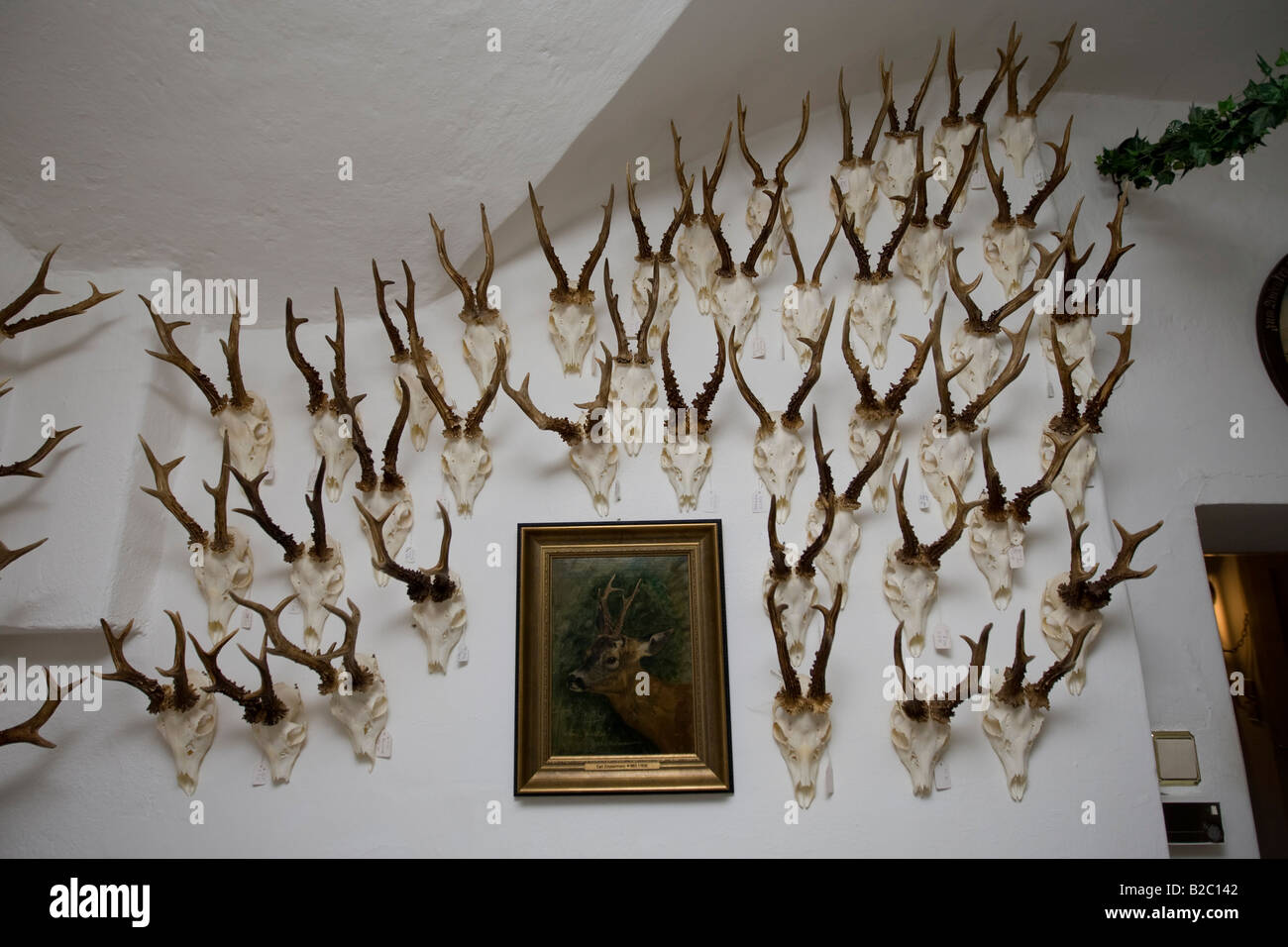 Trophies Of Deer Hanging On A Wall In Hunting Lodge Styria Austria Europe