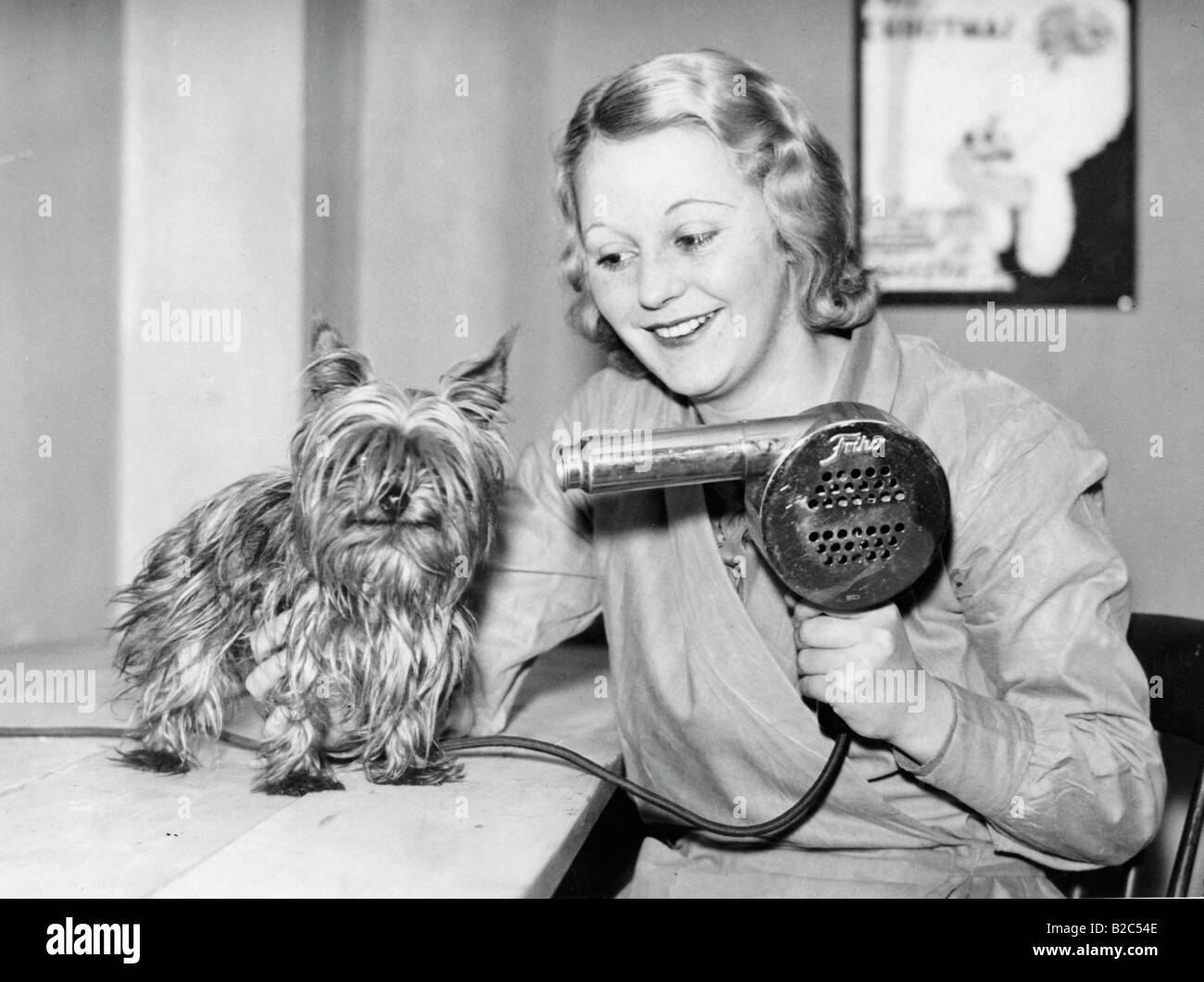 Dog being blow dried, historical photo, circa 1920 - Stock Image