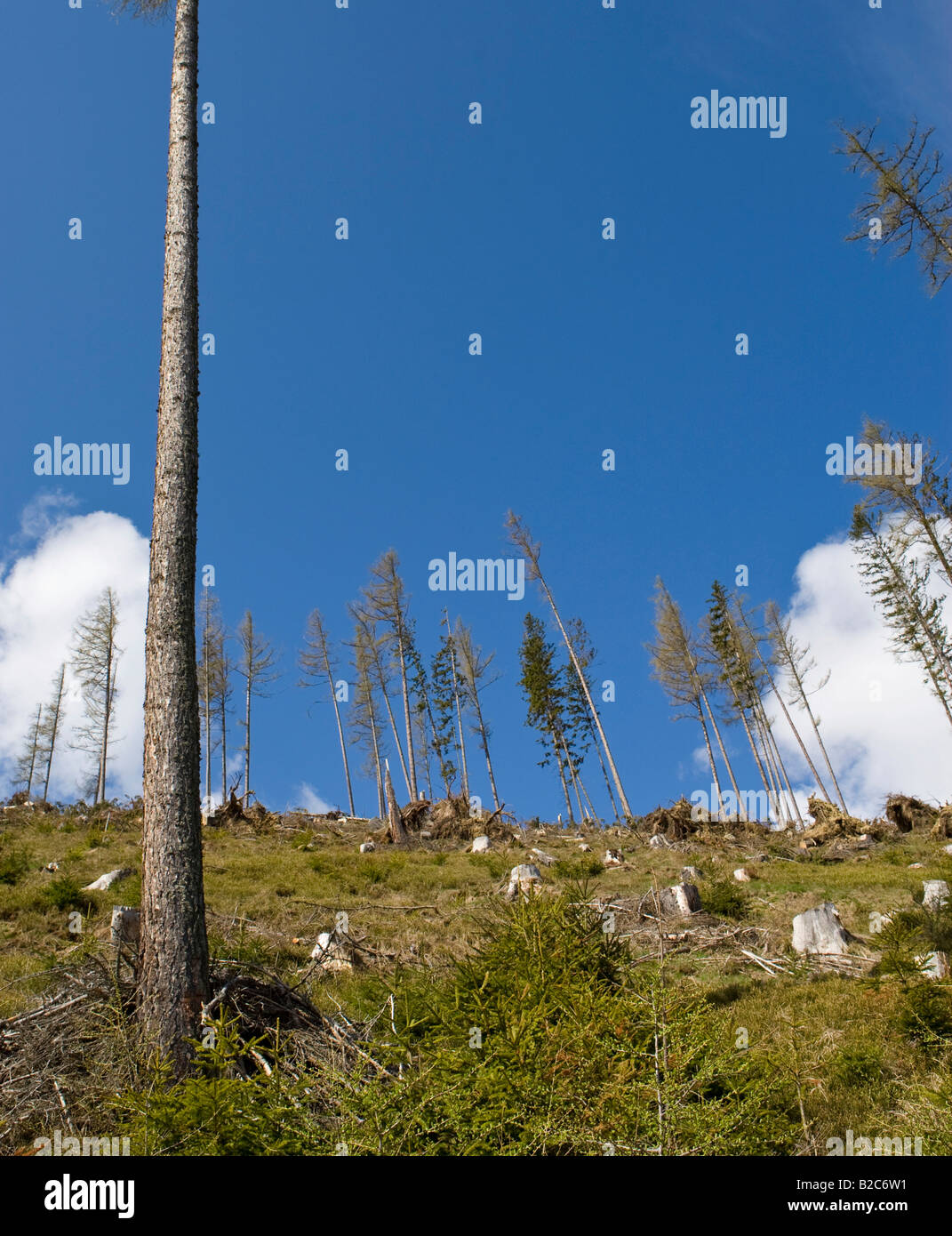 Mountainside with tree stumps after storm, Styria, Austria, Europe - Stock Image