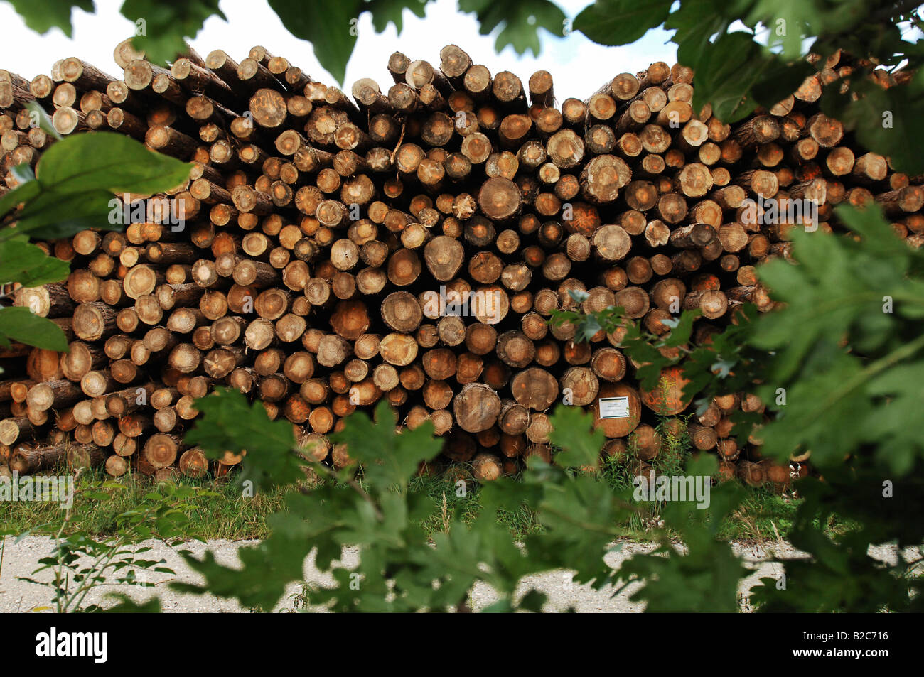 Stacked wood framed by leaves - Stock Image