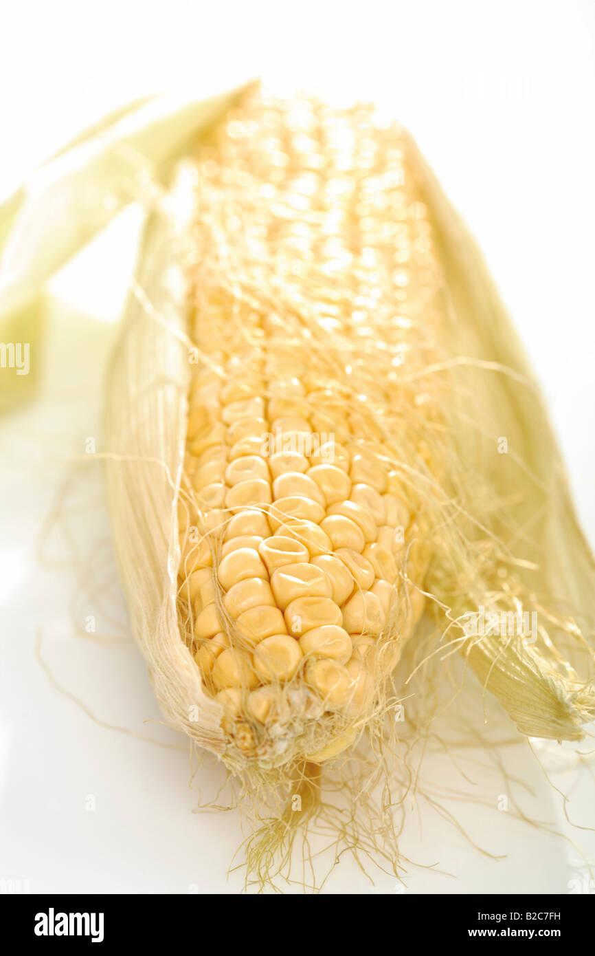 Corn on the cob (Zea mays) - Stock Image
