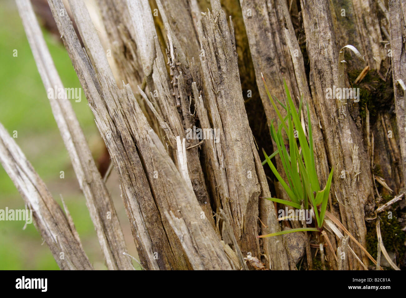 New habitat being settled, Lueerwald Forest, Sauerland, North Rhine-Westphalia, Germany, Europe Stock Photo