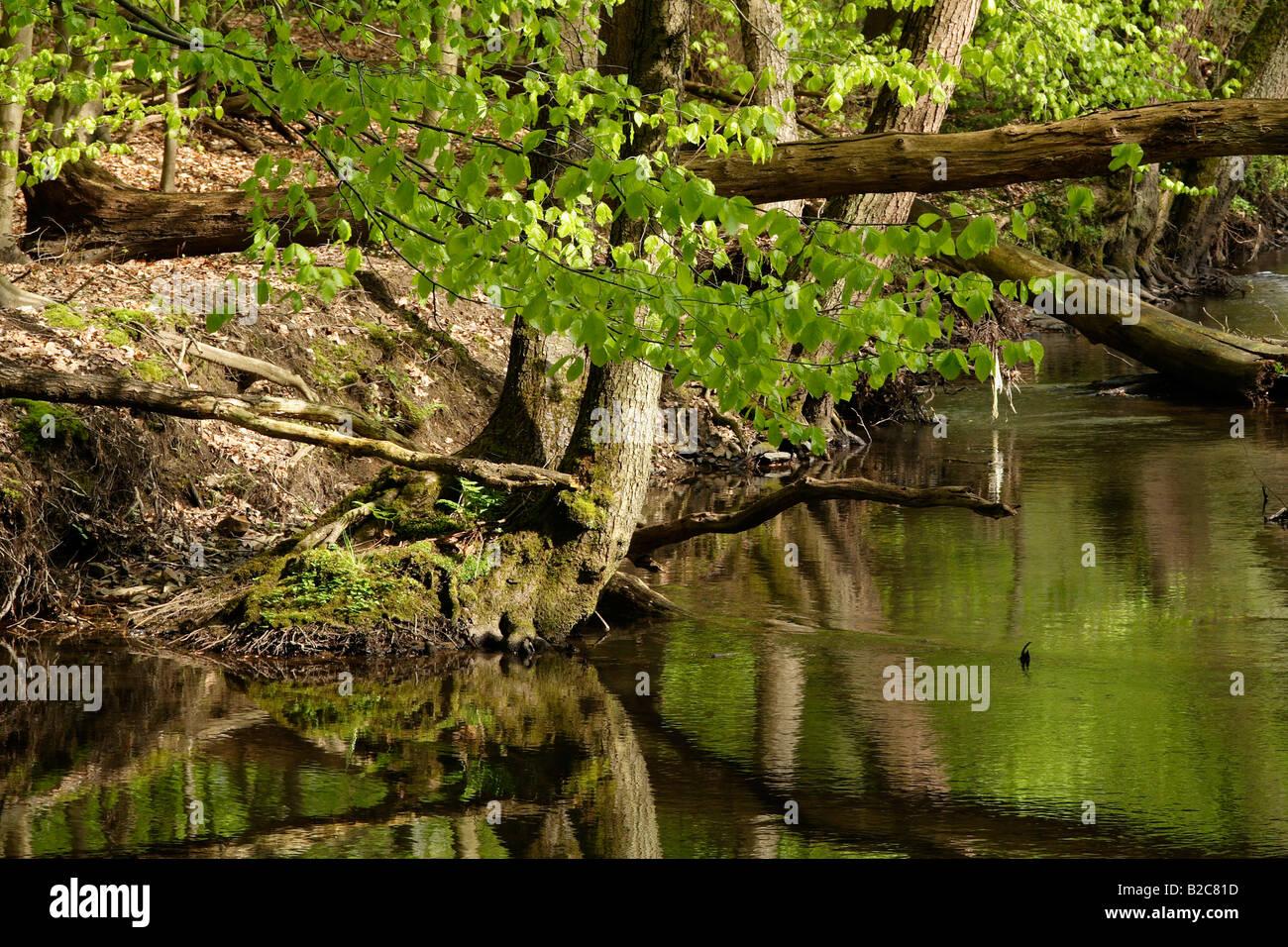 Stream, Lueerwald Forest, Sauerland, North Rhine-Westphalia, Germany, Europe - Stock Image