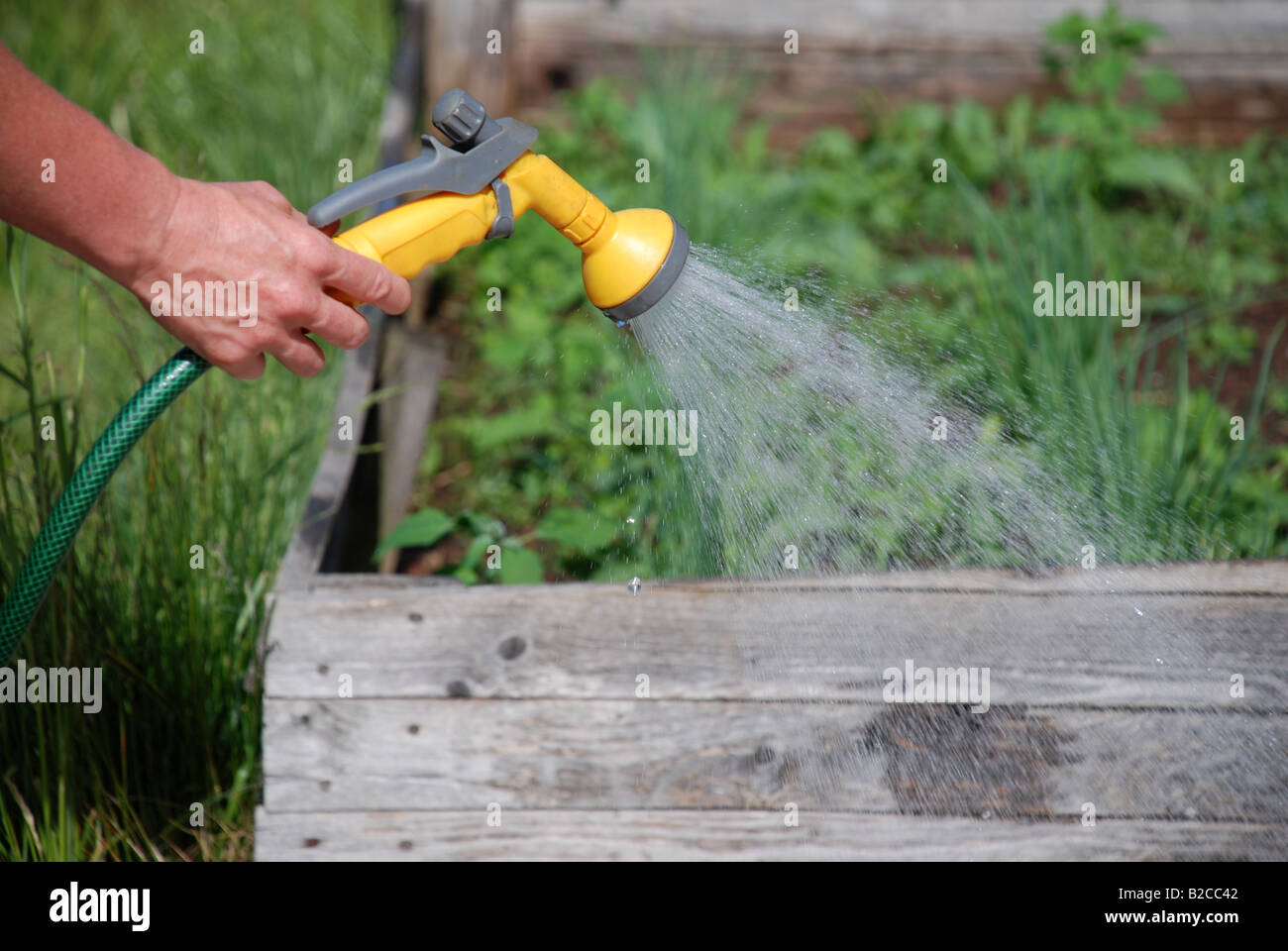 Sprinkle plants - Stock Image