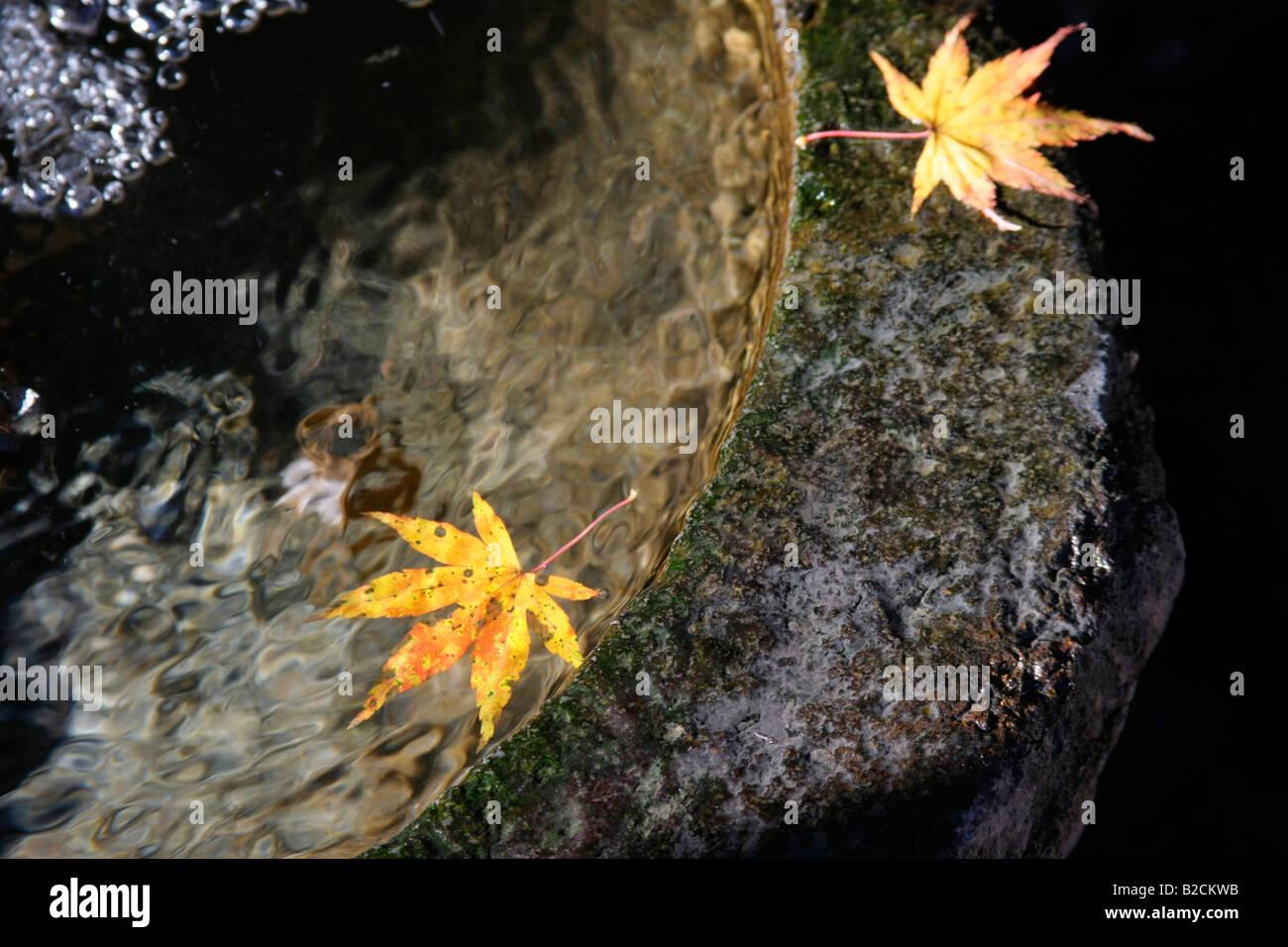 Japanese maple Autumn leaf color on a water at Mizusawadera temple Gunma Japan Stock Photo