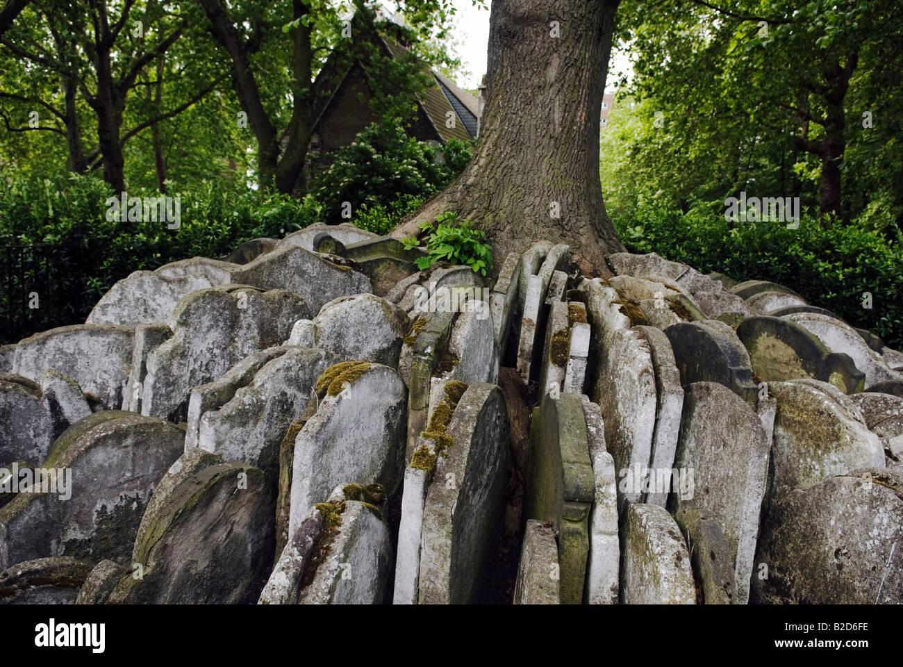 The Hardy Tree, St Pancras Churchyard, London - Stock Image