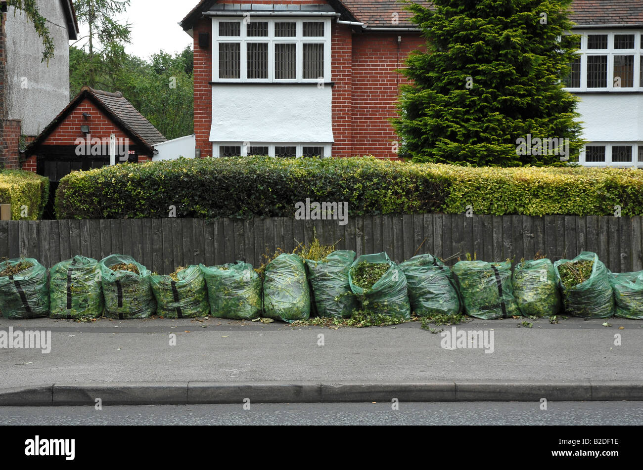 Green bags of garden waste await collection on the pavement in front of a suburban house with a  trimmed hedge in - Stock Image