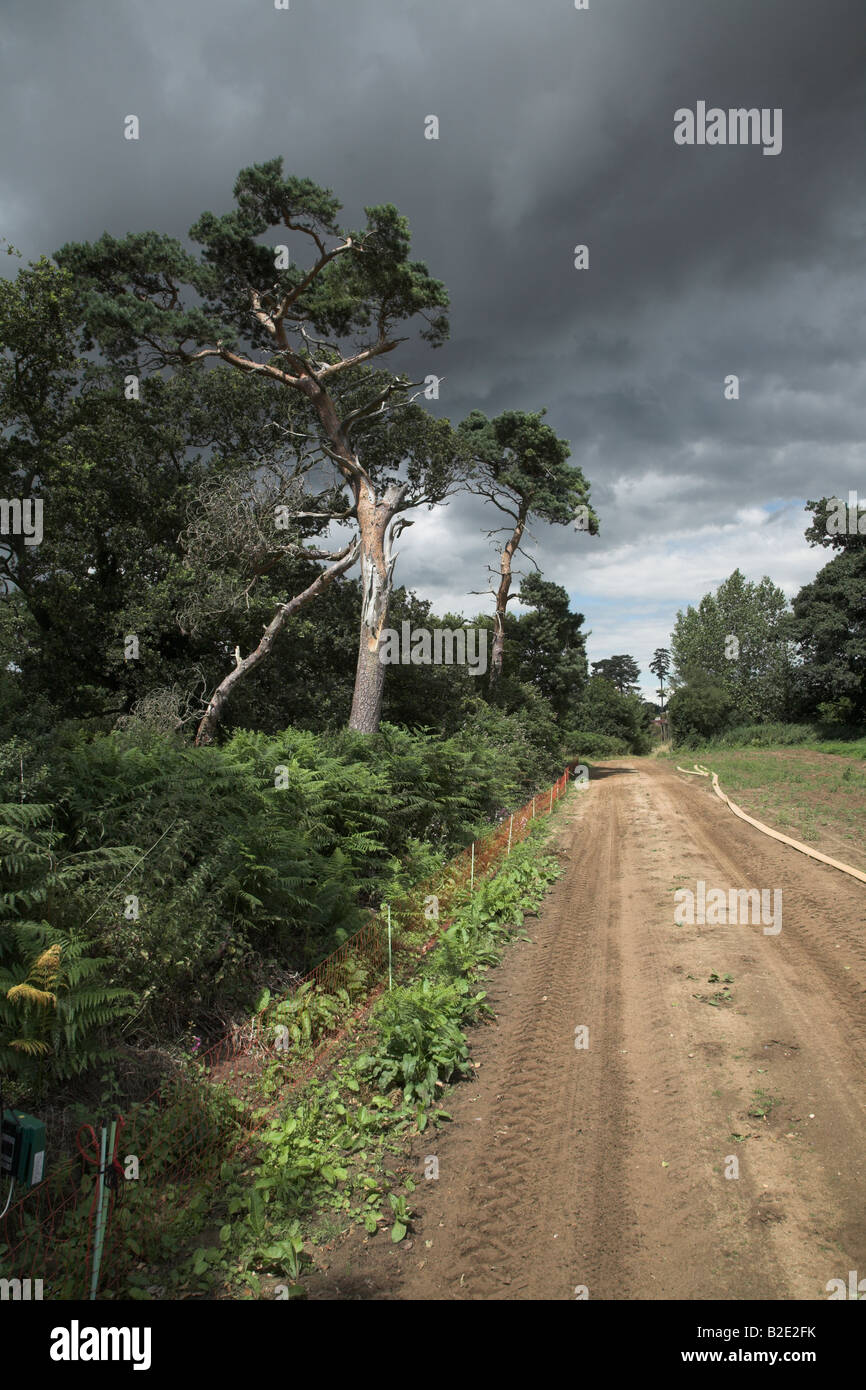 Storm clouds over country track and conifer trees - Stock Image