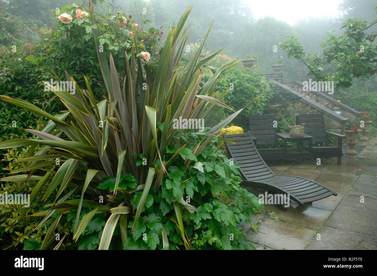 New Zealand flax Phormium and other plants with wet garden furniture in the rain - Stock Image