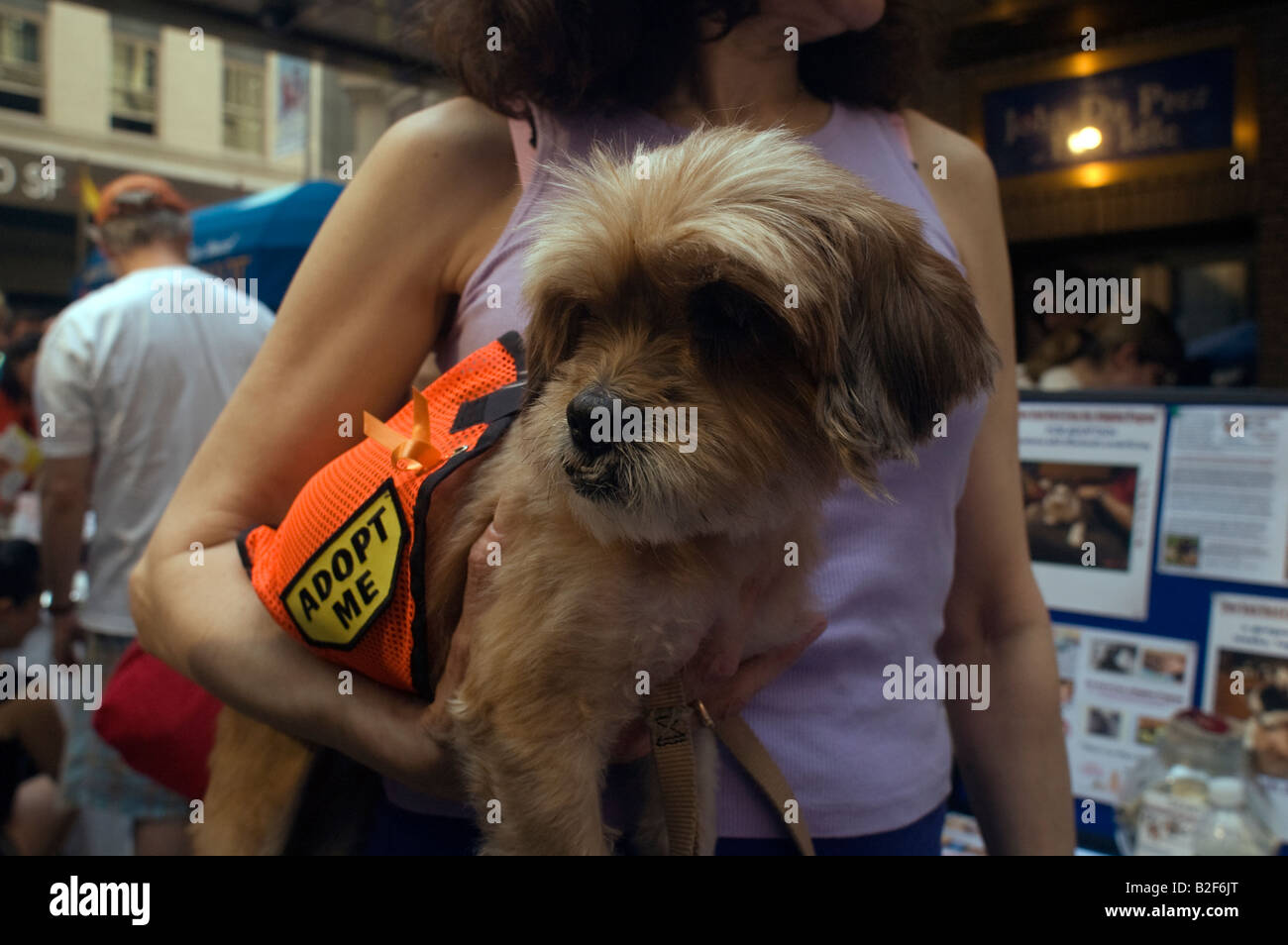 Dogs from the animal rescue group Pet I Care at the 10th annual Broadway Barks festival in the Shubert Alley in - Stock Image