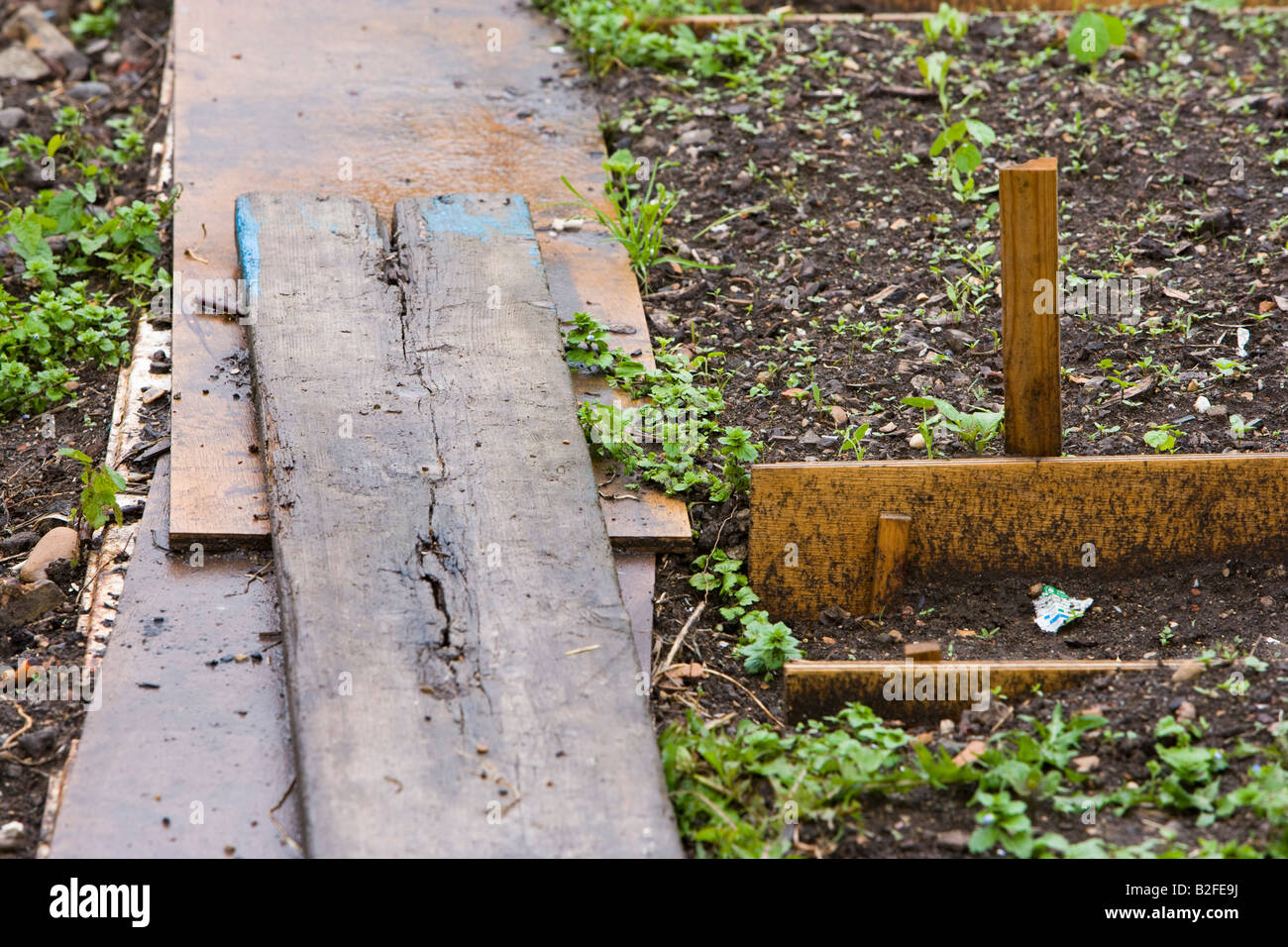 wooden planks placed across vegetable beds a pathway - Stock Image