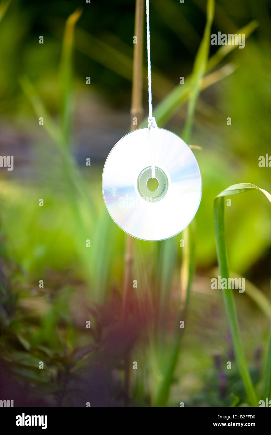 compact disc cd used to scare birds from garden vegetable patch - Stock Image